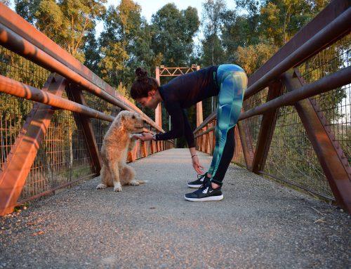 Entrenar con tu mascota tiene muchos más beneficios de los que imaginas