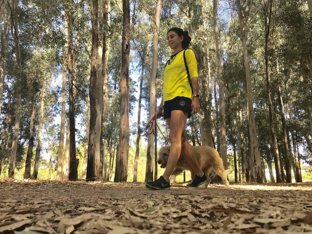 paseo perro mtraining minerva