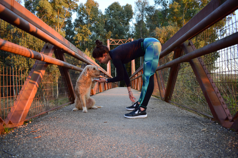 yoga dog mtraining