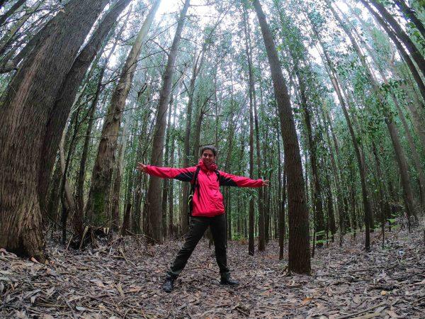 Bosque camino de santiago mtraining